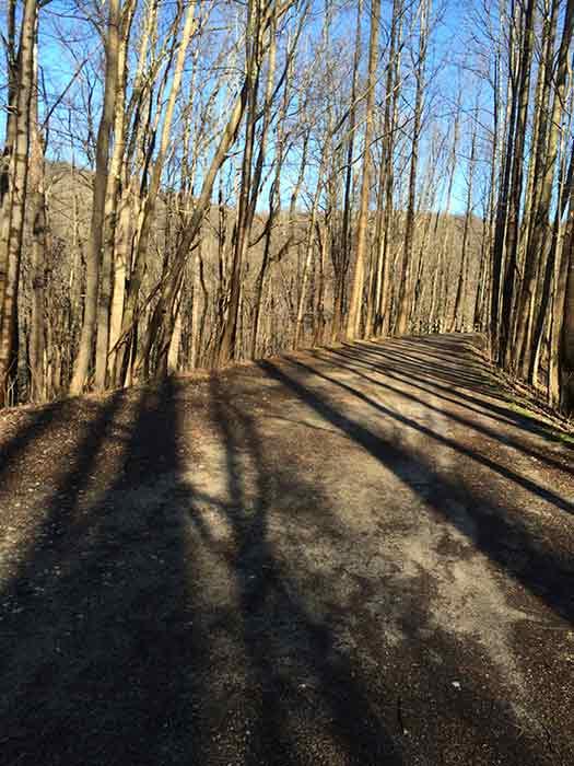bike-trail-walk-3-2016-01-09